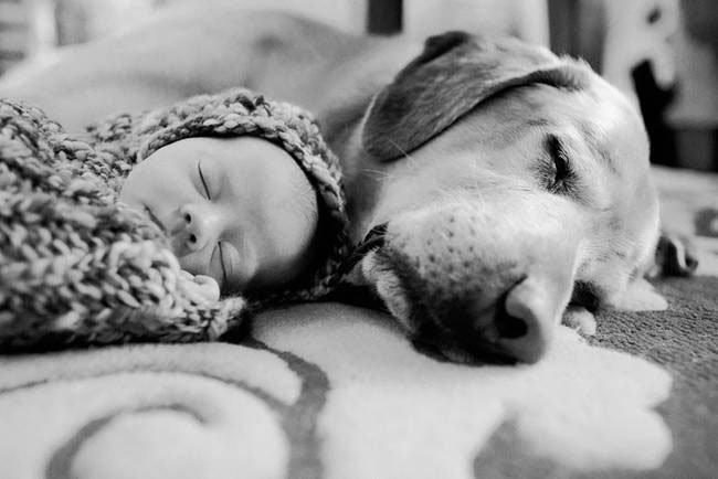 perro-cuidando-bebe15