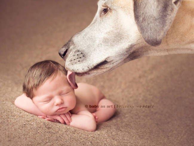perro-cuidando-bebe16