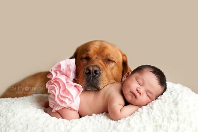 perro-cuidando-bebe17