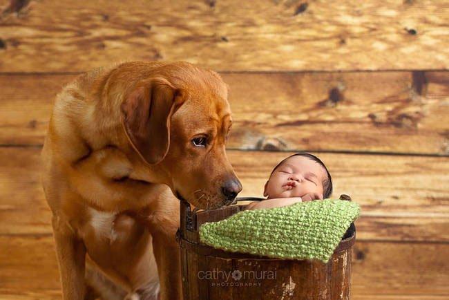 perro-cuidando-bebe18