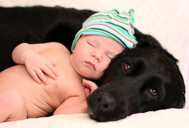 perro-cuidando-bebe2