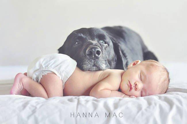 perro-cuidando-bebe20