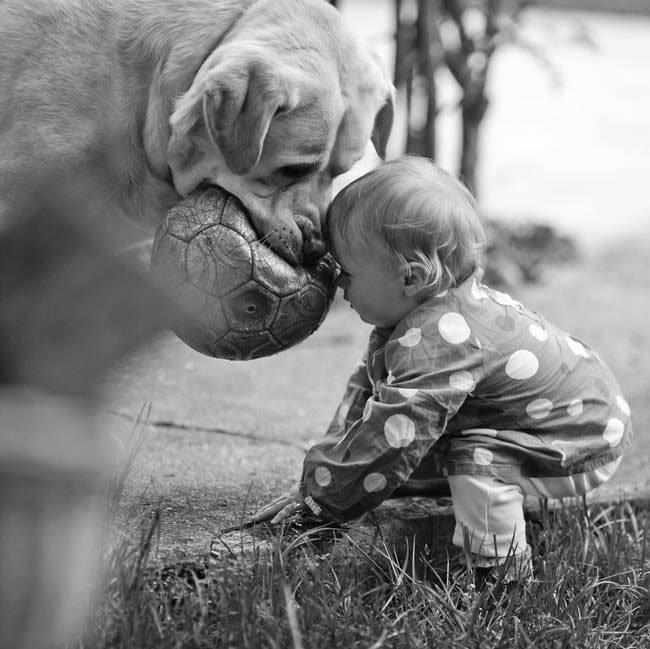 perro-cuidando-bebe3