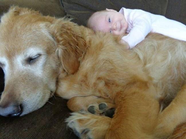 perro-cuidando-bebe4
