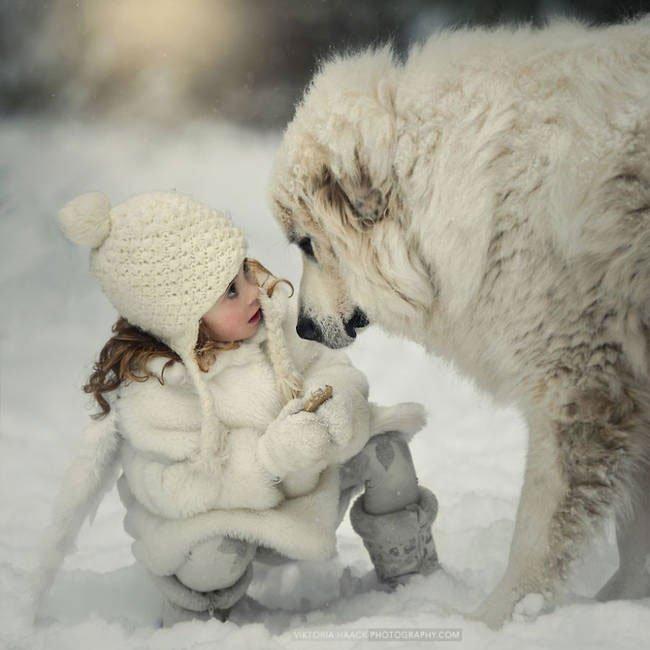 perro-cuidando-bebe5