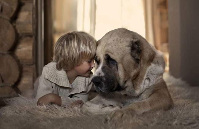 perro-cuidando-bebe6