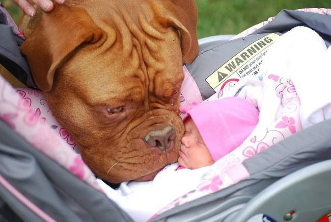 perro-cuidando-bebe8