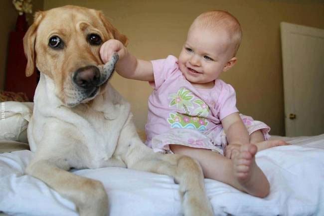 perro-cuidando-bebe9