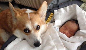 Grandes perros cuidando y mimando a niños pequeños. ¡Ternura máxima!