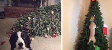 Animales VS decoraciones de Navidad. La adorable batalla de estas fiestas.