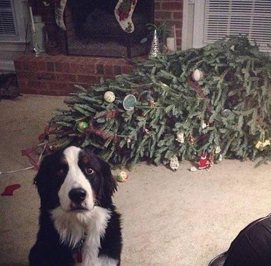 animal-vs-deco-navidad1