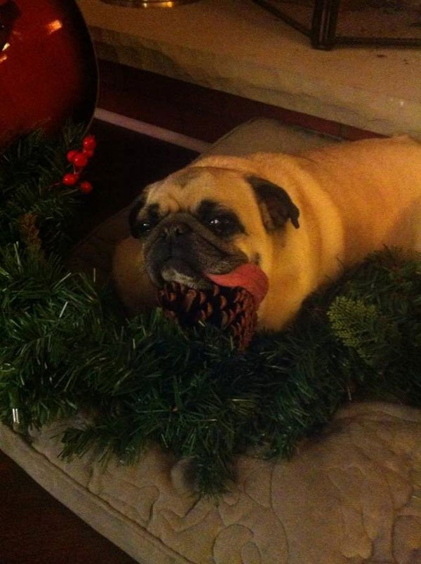 animal-vs-deco-navidad13