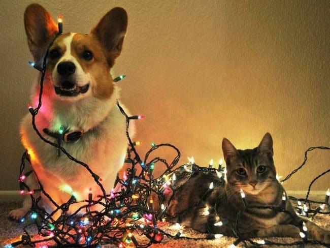 animal-vs-deco-navidad3