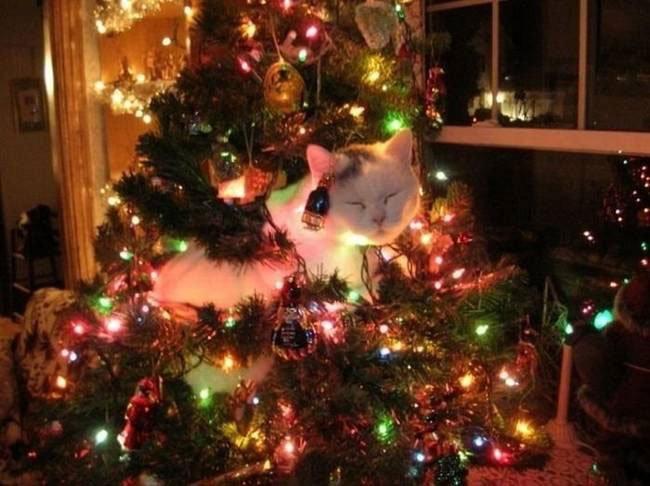 animal-vs-deco-navidad4