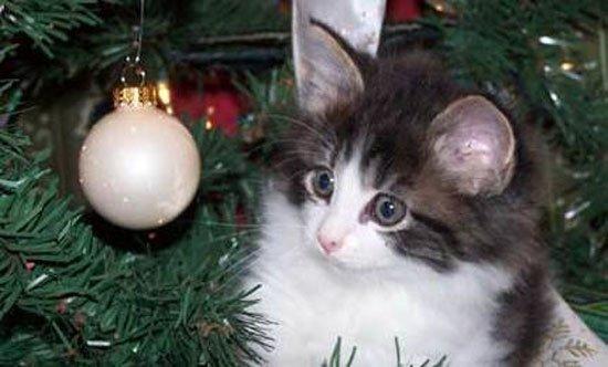 animal-vs-deco-navidad6