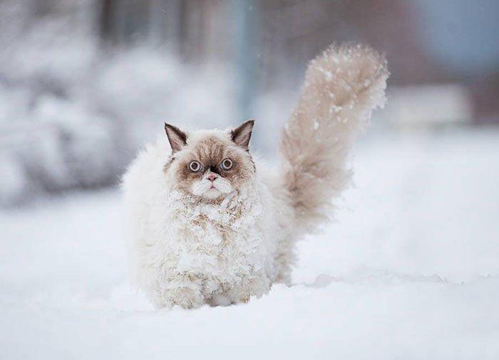 animales-nieve-primera-vez1