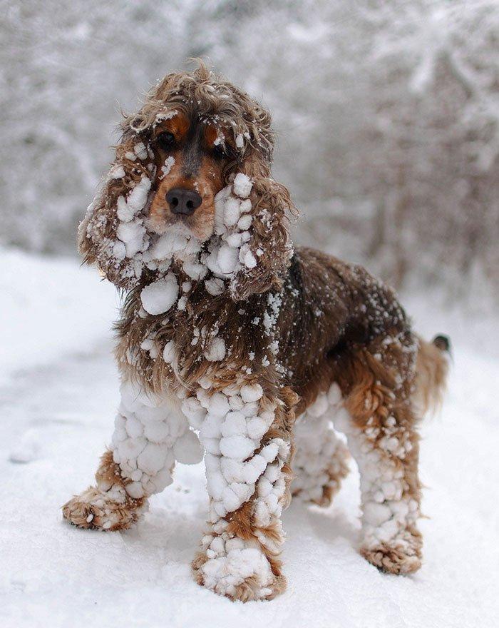 animales-nieve-primera-vez11