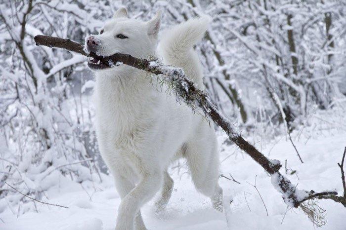 animales-nieve-primera-vez20