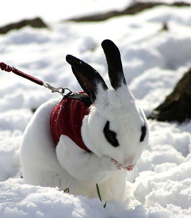 animales-nieve-primera-vez21