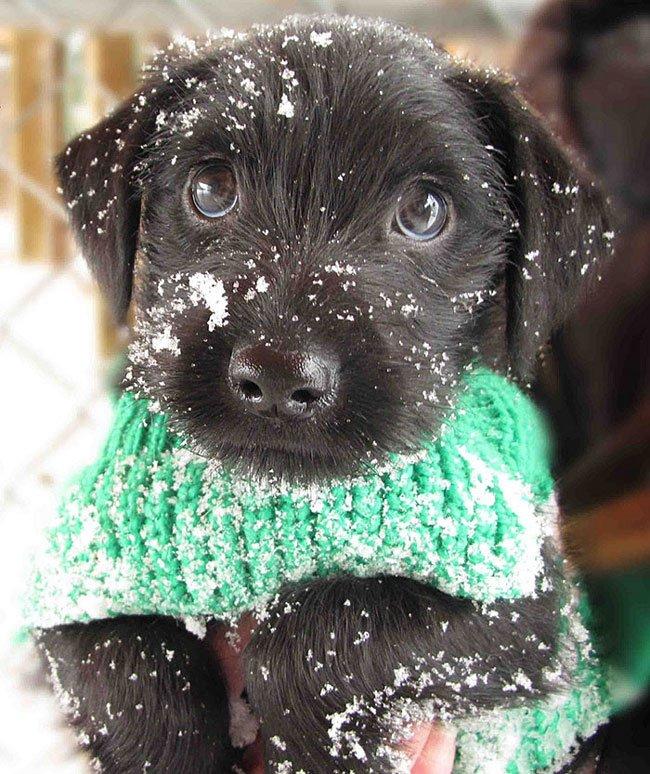 animales-nieve-primera-vez22