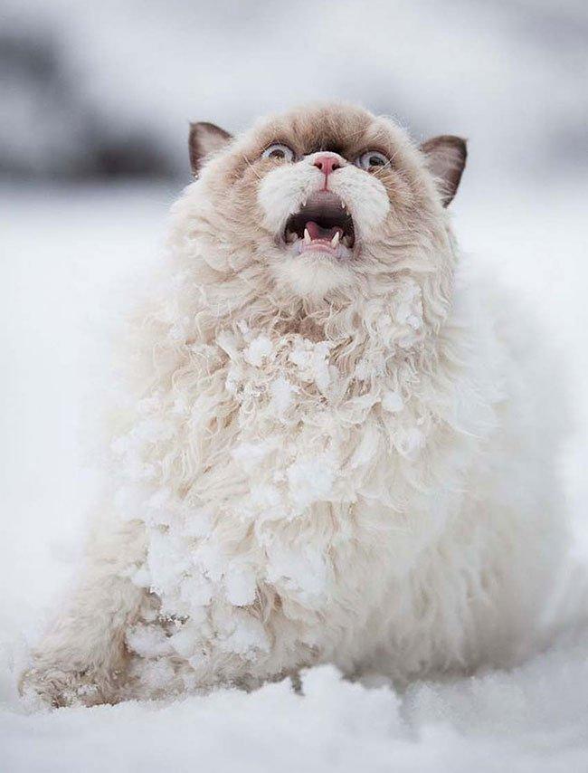 animales-nieve-primera-vez3