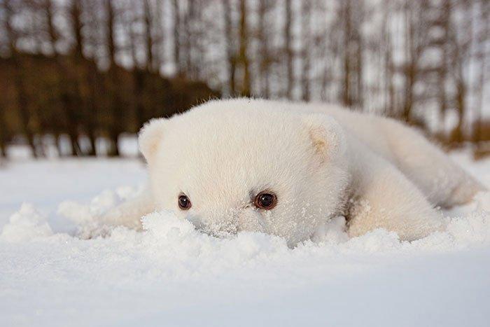 animales-nieve-primera-vez6