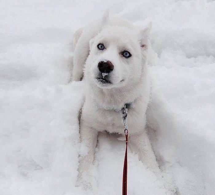 animales-nieve-primera-vez8