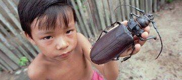 Estos son los 15 bichos más grandes del mundo. ¡No querrás encontrártelos!