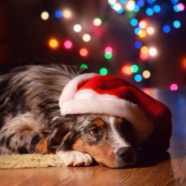 consejo-navidad-animal15