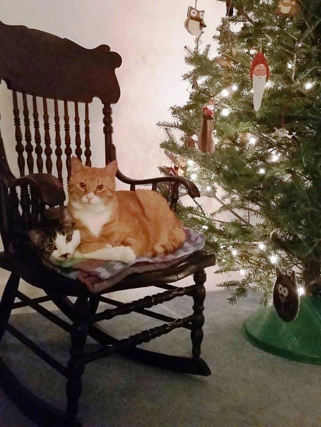 consejo-navidad-animal16