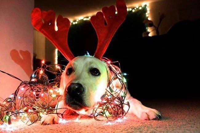 consejo-navidad-animal3
