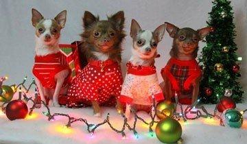 16 Consejos para las fiestas de Navidad explicados por animales con autoridad.