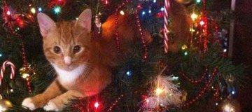 La Navidad es la época más maravillosa del año para ser un gato curioso.