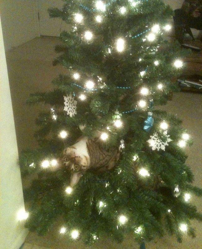 gato-curioso-navidad1