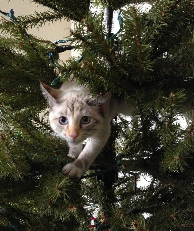gato-curioso-navidad11