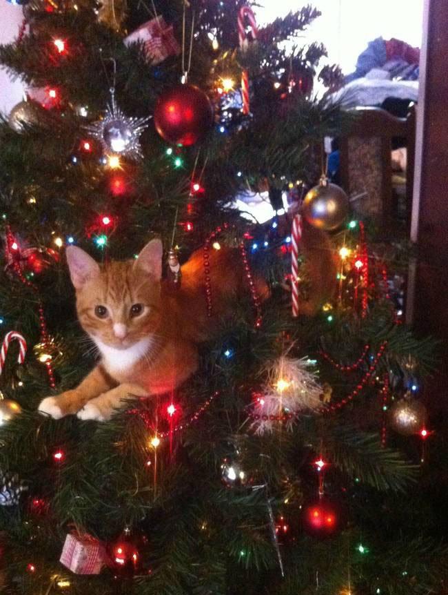 gato-curioso-navidad2
