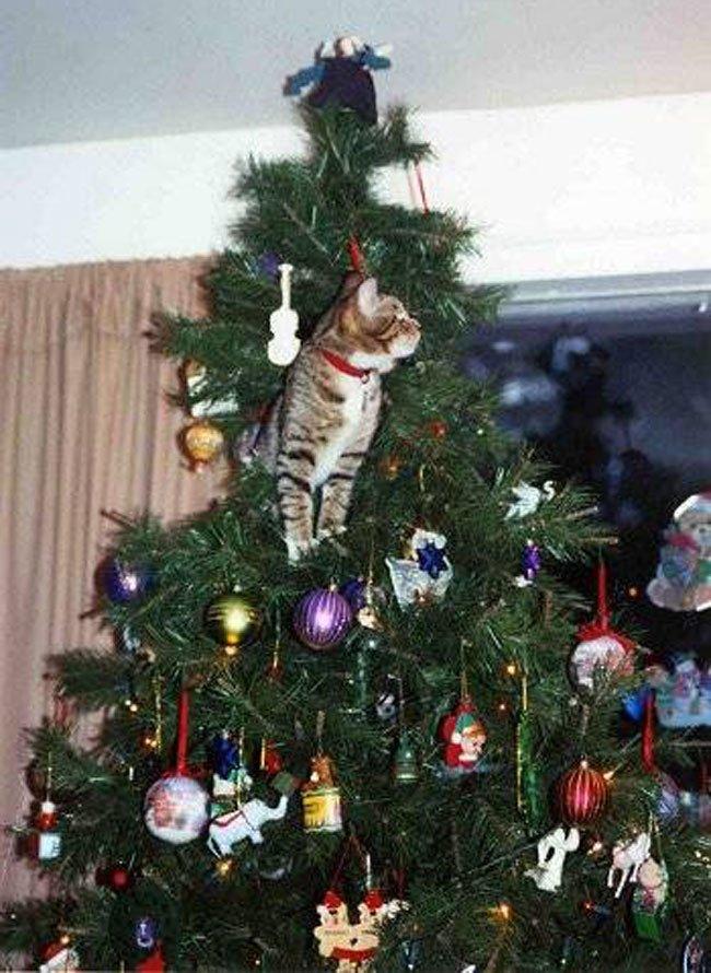 gato-curioso-navidad4
