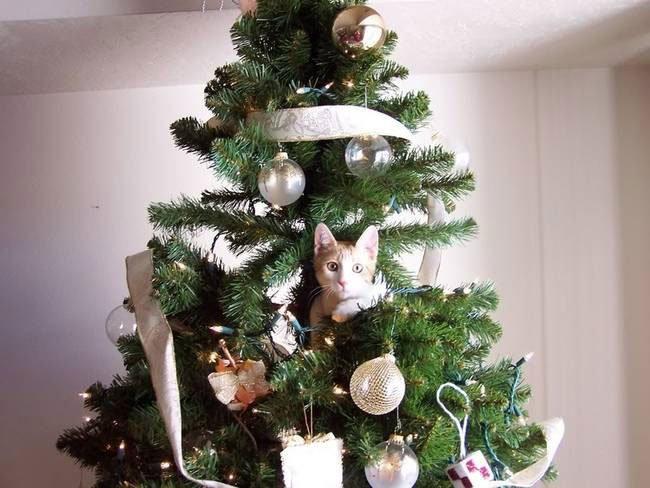 gato-curioso-navidad5