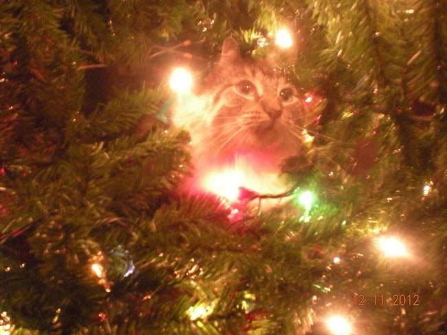 gato-curioso-navidad7
