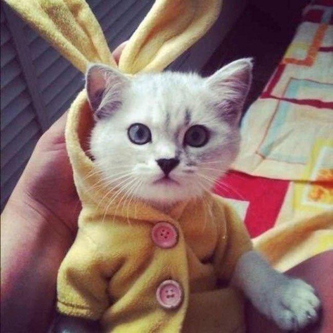 mascota-bien-vestida11