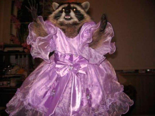 mascota-bien-vestida14