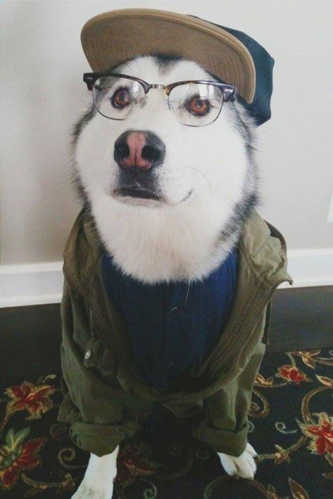 mascota-bien-vestida16