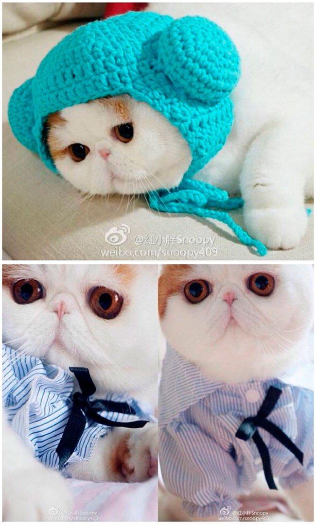 mascota-bien-vestida19