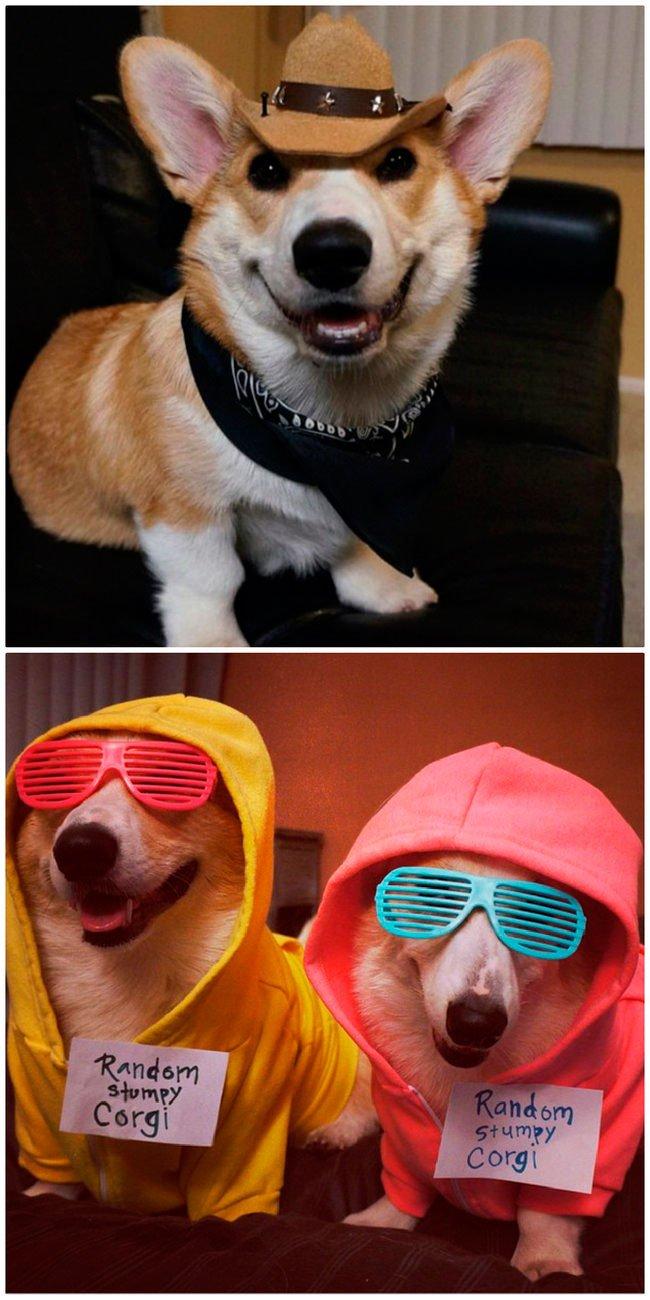 mascota-bien-vestida5