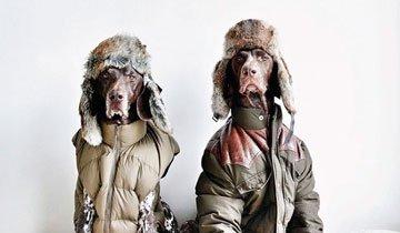 20 Mascotas que se vistieron mejor que todos nosotros durante 2014.