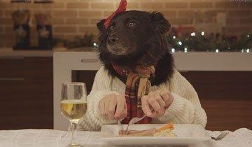 14 Mascotas disfrutando y saboreando las fiestas de Navidad con manos humanas.