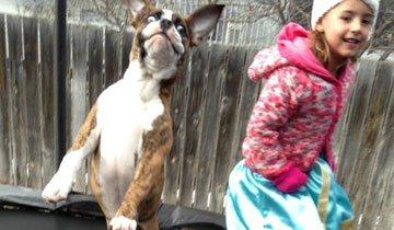 15 Niños pequeños descubriendo porqué los perros son el mejor amigo del hombre.