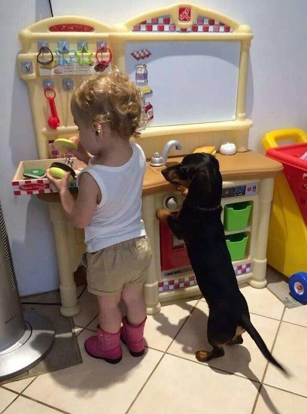 peque-perro-mejor-amigo3