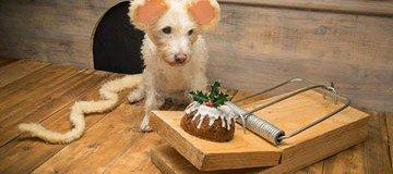 Cada Navidad, este fotógrafo convierte a su perro en protagonista de sus postales navideñas.