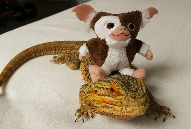 pringle-dragon-barbudo4
